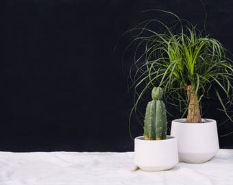 Modern White Porcelain Planter// Ceramic Home Decor for your House Plant Collection//White Ceramic Planter