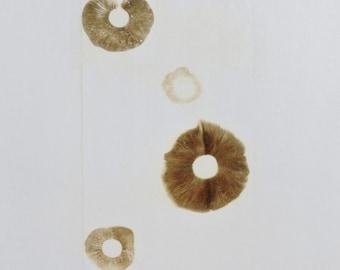 Pholiota carbonaria spore print.