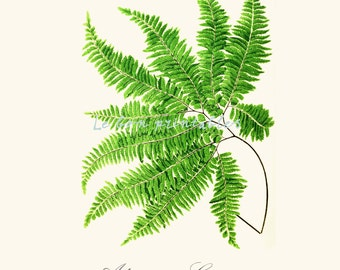 Printable art vintage fern wall decor instant download a4 jpeg