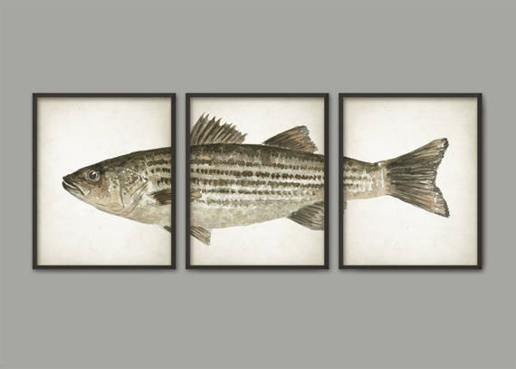 Striped Bass Watercolor Art Poster Set Of 3 Fish Print