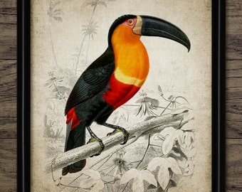 Toucan Print - Toucan Illustration - Toucan Bird - Tropical Bird Art - Digital Art - Printable Art - Single Print #811 - INSTANT DOWNLOAD