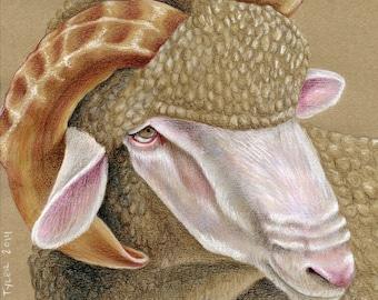 Sheep Original Drawing