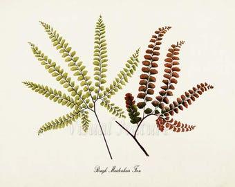 Rough Maidenhair Fern Art Print, Botanical Art Print, Fern Wall Art, Fern Print, Botanical Print, Home Decor, green art print