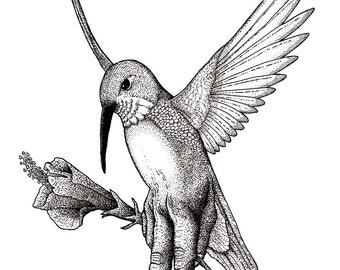 Metamorphosis IV: The Humming-Bird