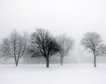 Winter Trees in Fog - SKU 0227