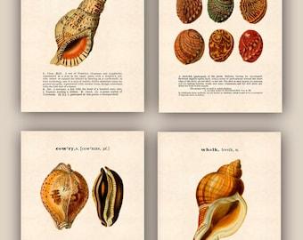 Nautical Prints, Nautical art, triton, abalone, cowry, whelk, Seashells collection, Set of 4 prints 11x14, original dictionary definitions