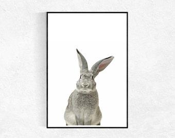 Rabbit Animal Print, Animal Photo, Woodland Decor, Woodland Animals, Baby Animal Print, Nursery Wall Art, Printable Art, Various Sizes