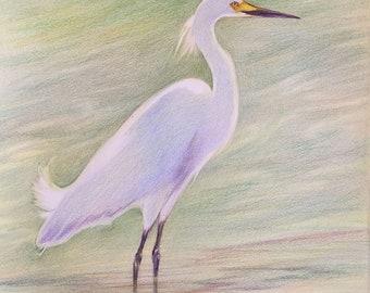 "White Heron Hunting - 14""x17"" - Original Color Pencil Drawing"