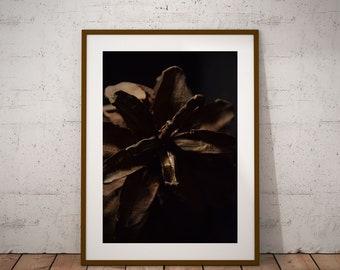 Sepia Print.Pinecone Photography. Digital Downloads. Home décor. Printable Art. Nature Photography. Botanical Print
