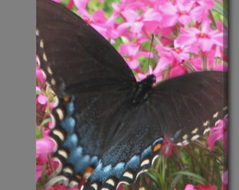Butterfly. 8x 10 inches Canvas- Wall Art