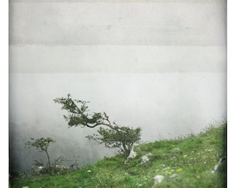 bonsai (Landscape Photography - Fine Art Print - Nature - Tree - Fog - Country - painting - Green)