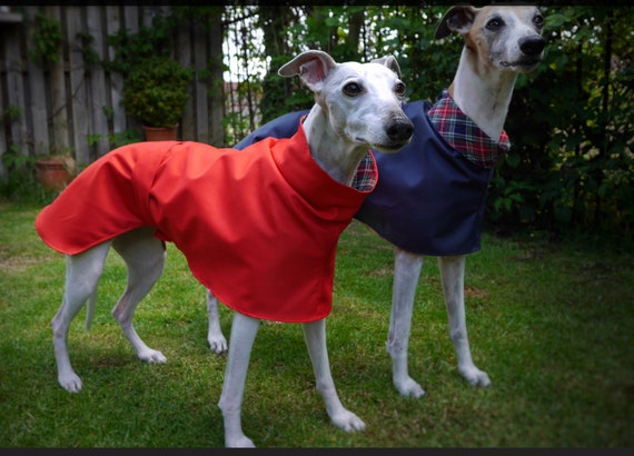 Readymade raincoat for whippets and greyhound