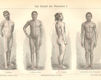 1903 Human Body Shapes - Males Original Antique Engraving