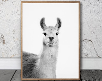 Llama Print - Llama Wall Art, Printable Photo, Digital Download, Black And White, Llama Portrait, Quirky Animal Art, South American Art