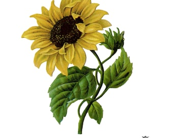 Sunflower temporary tattoo, vintage sunflower tattoo, Sun flower, festival tattoo, Body Art, Skin Art, Wickedlylovely, (choose your size)