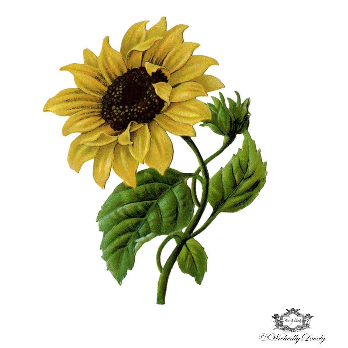 Sunflower temporary tattoo vintage sunflower tattoo sun for Sunflower temporary tattoo