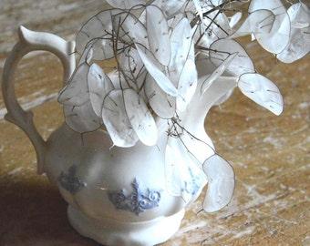 Money Plant Seeds, Lunaria Seeds, Heirloom Flower Garden Seed, Cottage Garden Favorite, Grow Your Own Dried Flowers
