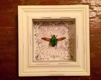 Jewel Beetle In Shadowbox