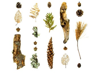 Woodland series No.2 - photograph - pine cones, lichen, and branches from the Maine woods