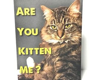 A1 - Are You Kitten Me? - Funny Cat Card  -  set of 5 blank cards with envelopes  • size 5.25 in x 4 in • Free Shipping