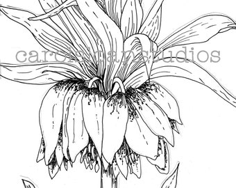 Crown Imperial Flower Thermofax Screen