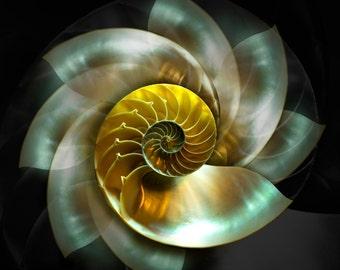 Spinnig Nautilus