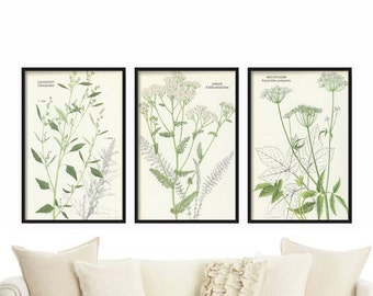 Botanical Herbs Print Set - Floral Print Set, Botanical Prints, Botanical Herb Set, Canvas Art, Botanical Illustration Set, Art Illustration