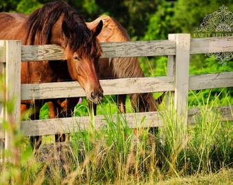 Two horses in their fenced field