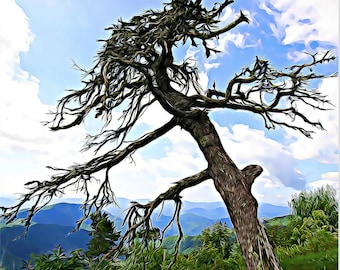 Tree, Blue Ridge Parkway