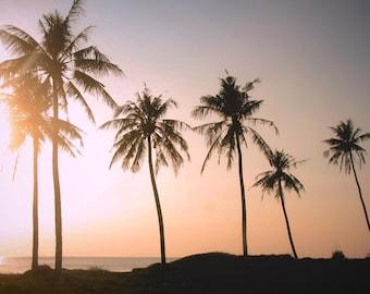 Palms Realm