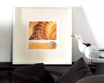 Marea giallo, opera a tecnica mista. Fotografia macro originale lavorata a collage con conchiglia e foglie.Colore giallo per la casa al mare