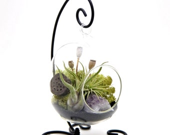"""Air Plant Terrarium Kit with Purple Amethyst / 6"""" Oval Glass / Midnight Forest  / 6"""" Oval"""