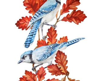 Blue Jays in Oak Tree Print - Archival Quality reproduction of the original watercolor