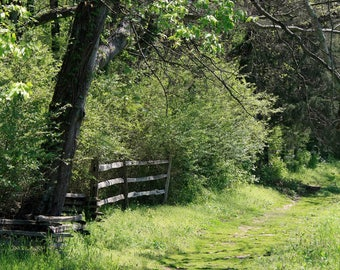 Grassy Green Path Photo - Woodland's Edge Photograph - Verdant Spring - Nature Wall Art - Wooden Fence and Tall Trees Photos - Sunny Spring