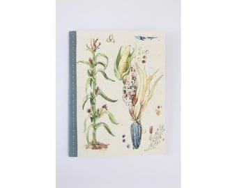Corn botanical illustration, Sketchbook / Notebook