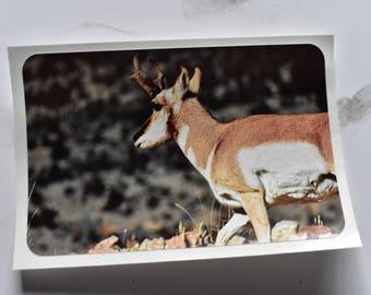 Pronghorn sticker
