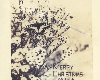 vintage photo Unusual Butterfly on Flowers Christmas Greeting photo