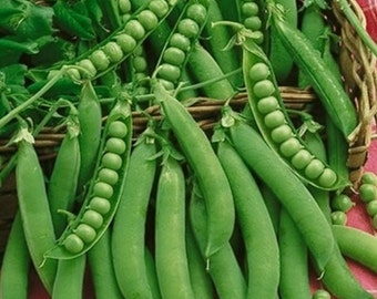 Homesteader Lincoln Heirloom Pea Seeds Non-GMO Naturally Grown Open Pollinated Gardening
