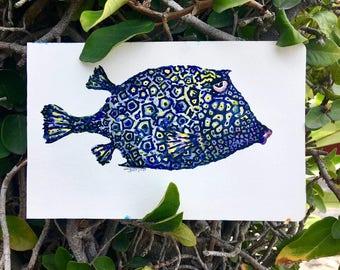 Honeycomb Cow Fish Illustration