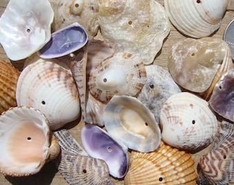 24 Center drilled Sea shells-Kit to Create Sea shell Mobile-Italian sea shells-Wind chimes-Creative Material for Children