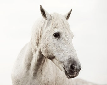 "White Horse Photograph, Nature Photography, Horse Decor, Neutral Wall Art, Minimalist Art Print, ""White on White #2"""
