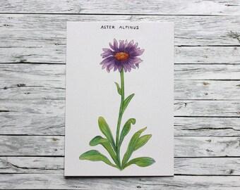Postcard - Aster - Vintage Flowers - pen&alex
