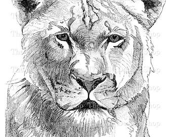Lioness Printable Clip Art Vintage Animal Illustration Digital Download PNG JPG Image