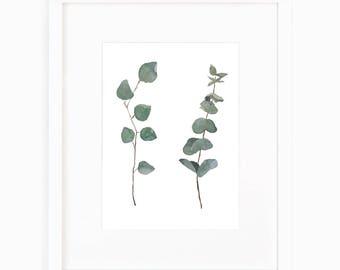 Eucalyptus Varieties
