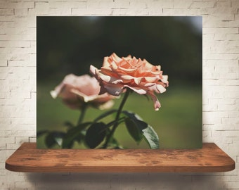 Flower Photograph - Fine Art Print - Color Photo - Wall Art - Floral Decor - Wall Decor - Pictures of Flowers - Rose - Roses