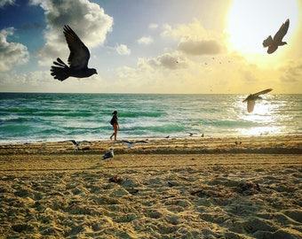 Miami Mornings...Sunrise walk at Miami Beach Florida, Bird, Animals, Wall Art, Print Photography, Wanderlust