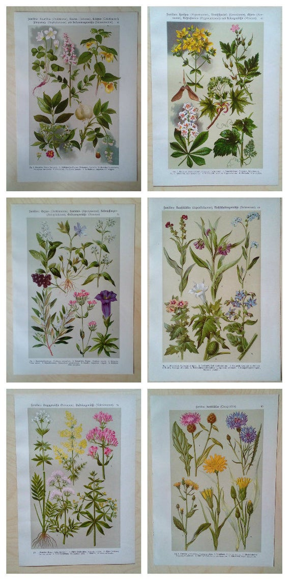 Presente conjunto biólogo botánico regalo de estudiante arte