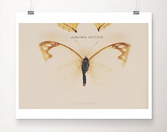 butterfly photograph insect photograph animal photography  zoology photograph mustard home decor butterfly print zoology print