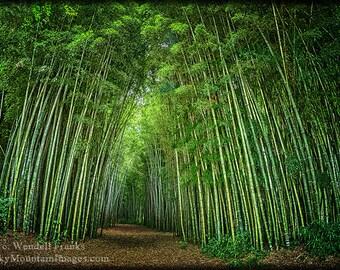 Path Through Bamboo Forest E139