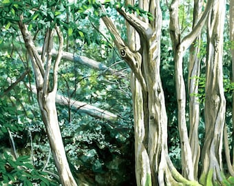 Ancient English Woodland, watercolour painting